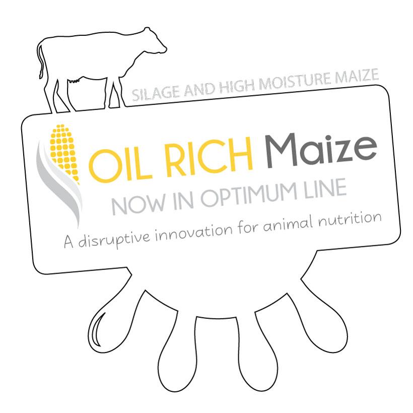 Oil RIch Maize